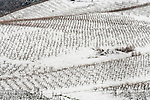 Sobon Estate Winery vineyards coated with snow from a passing winter storm in the Sierra Foothills, Amador Co. California.