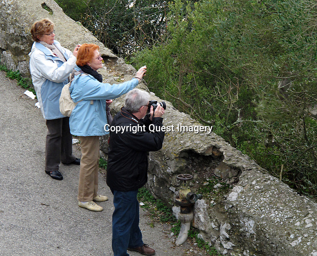 Tourists take photos of young monkeys jumping from trees at the Upper Rock of the Rock of Gibraltar.<br />