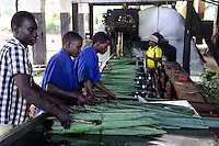 TANZANIA Tanga, Usambara Mountains, Sisal farming and industry, D.D. Ruhinda & Company Ltd., Mkumbara Sisal estate, Fibre is extracted by a process known as decortication, where leaves are crushed and beaten by a rotating wheel set with blunt knives, so that only fibres remain / TANSANIA Tanga, Sisal Industrie, D.D. Ruhinda & Company Ltd., Mkumbara Sisal estate, Decortication Maschine  zur Gewinnung der Faser aus den Blaettern der Sisalpflanze