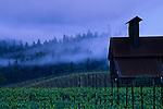Cloudy morning over vineyard in the Anderson Valley, near Philo, Mendocino County, California