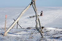 Tuesday March 13, 2007   ----   Lance Mackey, the 2007 Iditarod champion runs past on the trail framed by a driftwood tripod trail marker 8 miles from Nome.