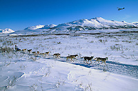 DeeDee Jonrowe In Rainy Pass Area Alaska.2004 Iditarod