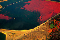 Aerial landscape of a cranberry bog at harvest time. Caver, Massachusetts.