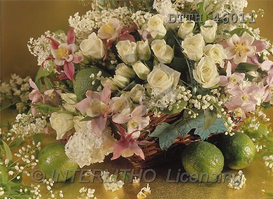 Helga, FLOWERS, portrait, macro, photos, white roses, lemon, DTTH, DTTH46011,#F# Blumen, flores, retrato