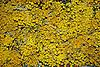 getrocknete Kamillenbl&uuml;ten<br /> <br /> 1840 x 1232 px<br /> 150 dpi: 31,16 x 20,86 cm<br /> 300 dpi: 15,58 x 10,43 cm<br /> Original: 35 mm