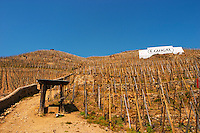 Graphic geometric vineyard with vines trained in 'en echalat' with supporting wooden stakes, winter pruned with no branches or leaves. Sign E Guigal in the background. Very steep hill slope. Terraced vineyards in the Cote Rotie district around Ampuis in northern Rhone planted with the Syrah grape. Ampuis, Cote Rotie, Rhone, France, Europe