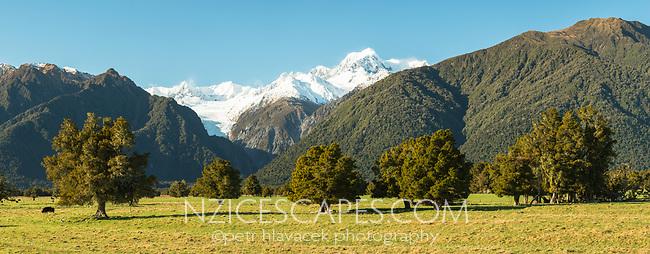 Morning on farmland at Fox Glacier with Mount Tasman, Westland Tai Poutini National Park, West Coast, New Zealand, NZ