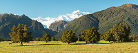 Morning on farmland at Fox Glacier with Mount Tasman, Westland Tai Poutini National Park, West Coast, New Zealand, NZ