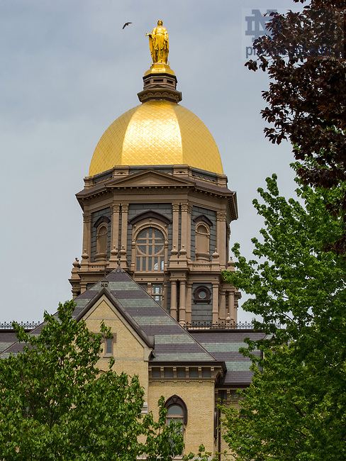 May 3, 2017; Golden Dome, 2017 spring. (Photo by Barbara Johnston/University of Notre Dame)