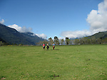 Chile, Lake Country: People riding horses at Peulla in a meadow in the Andes..Photo #: ch611-33259..Photo copyright Lee Foster www.fostertravel.com, lee@fostertravel.com, 510-549-2202.