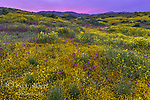 Owls Clover, Monolopia, Coreopsis, Goldfields, Caliente Range, Carrizo Plain National Monument, San Luis Obispo County, California