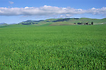 Fertile grasslands, near Tassajara, Contra Costa County, CALIFORNIA
