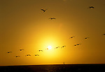 FL: Florida Everglades National Park,.Sunset and birds at Flamingo.Photo Copyright: Lee Foster, lee@fostertravel.com, www.fostertravel.com, (510) 549-2202.Image: flever218