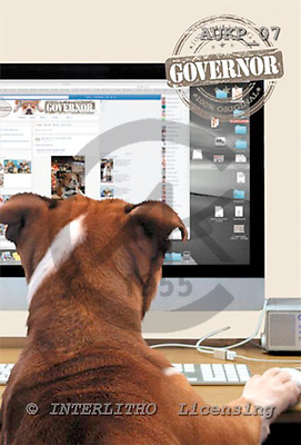 Samantha, ANIMALS,  photos,+dogs,++++Bulldog Computer master,AUKP07,#A# Humor, lustig, divertido