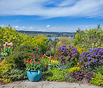 Vashon-Maury Island, WA: Flagstone patio featuring colorful pots with tulips edged by perennial garden beds on a blue sky day in spring