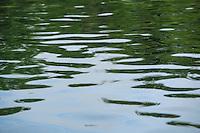 Vatten vågor spegling i Stockholms skärgård