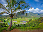 Kauai, Hawaii:<br /> Palm tree frames the view of Hanalei Valley taro fields and central mountains in morning sun, Hanalei National Wildlife Refuge