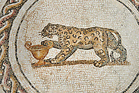 Picture of a Dionysiac Roman mosaics design depicting  panther in front of a wine crater, from the ancient Roman city of Thysdrus. 3rd century AD. El Djem Archaeological Museum, El Djem, Tunisia.