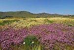 Carrizo Plain National Monument, CA  by Frank Balthis