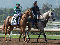 ARCADIA, CA. JUNE 3: #2 Stellar Wind in the post parade of the Beholder Mile on June 3, 2017 at Santa Anita Park, in Arcadia, CA.Photo by Casey Phillips/Eclipse Sportswire/Getty Images)