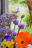 Edible herb flowers (Chives, Calendula, Pansy or Viola, Borage) in blue vases on rustic country ledge
