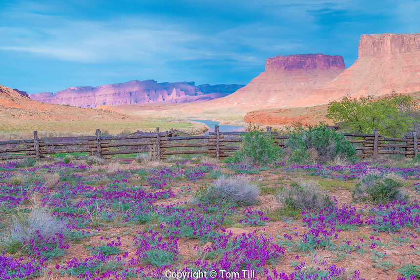 Spring Vetch, Valley View | Tom Till