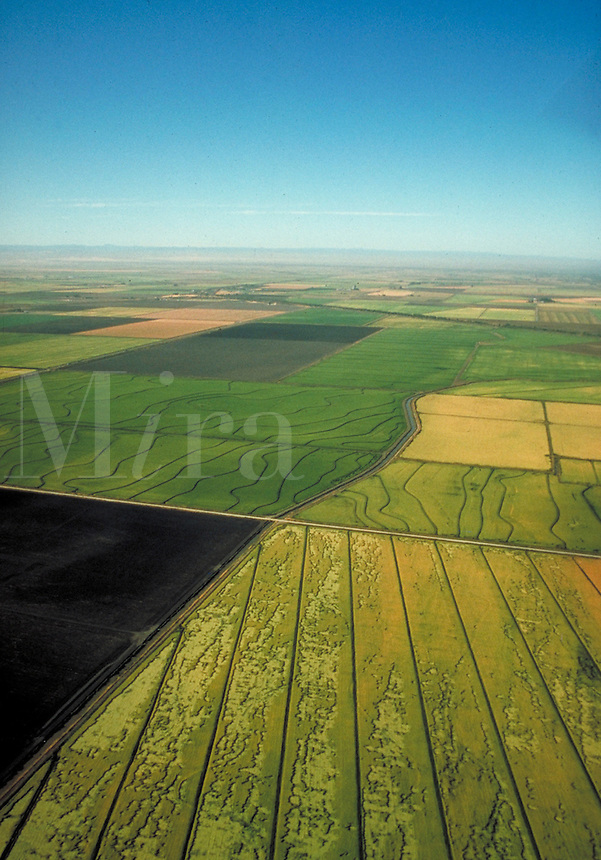 aerial shot of rice fields in Central Valley area near Sacramento. food, grain, crop, crops, agriculture, agribusiness, irrigation, brown rice. California, Sacramento Valley.