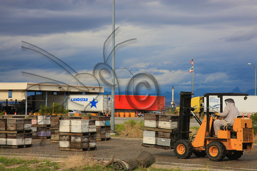Inspection of hives at the Californian border to check for ants. Here, a truck has been stopped and the load has to be cleaned.