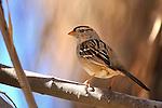 small bird with orange beak out on a limb