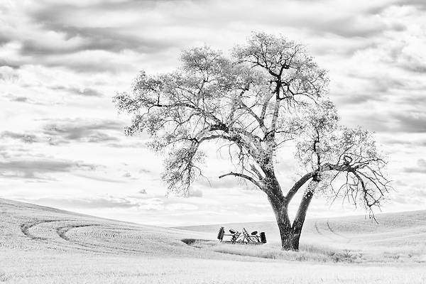 Black and white infrared image of tractor and tree in the Palouse farm region of Washington