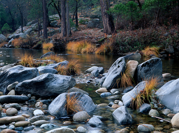 The SF of the Merced River flowing quietly through the Wawona Area of Yosemite NP displays it's golden autumn colors.