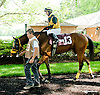 C C Gold before The Justakiss Stakes at Delaware Park racetrack on 6/5/14