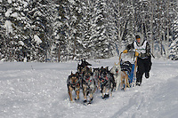 Headed towards a first place finish, Cain Carter, runs on the in-bound trail nearing the finish line of the 2009 Junior Iditarod in Willow, Alaska.   Cain is the step-son of current Iditarod champion Lance Mackey and is running Lance's Iditarod team.  March 1, 2009