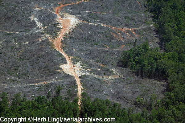 Aerial view of clearcutting, forest, Alabama