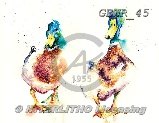 Simon, REALISTIC ANIMALS, REALISTISCHE TIERE, ANIMALES REALISTICOS, paintings+++++LizC_Ducks,GBWR45,#a#, EVERYDAY