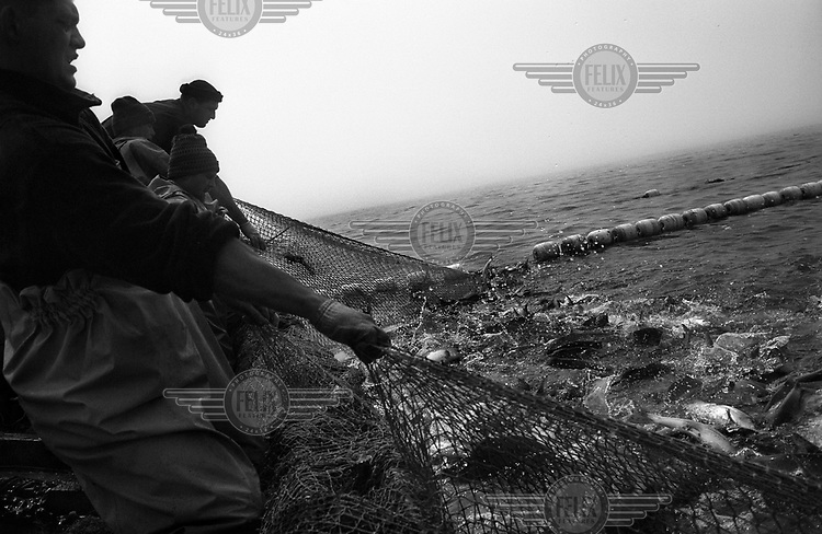 Fishermen pull up their nets in the Gulf of Patience off the island of Sakhalin in Far Eastern Russia.