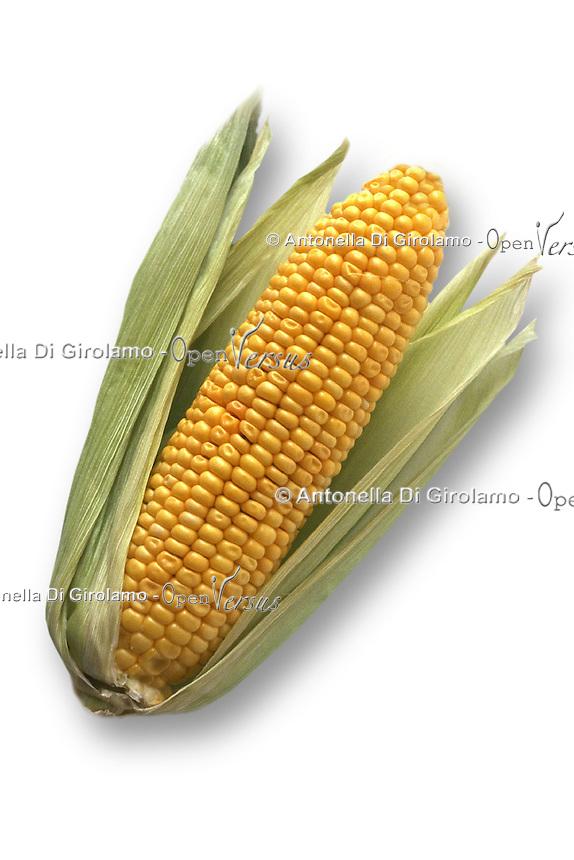 Mais. Corn.