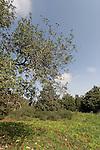 Israel, Mount Carmel. The Nature Park at Ramat Hanadiv