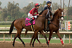 ARCADIA, CA  JANUARY 06: #8 Itsinthepost, ridden by Tyler Baze in the post parade of the San Gabriel Stakes (Grade ll) on January 6, 2018, at Santa Anita Park in Arcadia, CA.(Photo by Casey Phillips/ Eclipse Sportswire/ Getty Images)