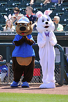 Cubbie Bear, the Cub's mascot and the Easter Bunny cheer during team introductions prior to to an Iowa Cubs game against the Round Rock Express at Principal Park on April 16, 2017 in Des  Moines, Iowa.  The Cubs won 6-3.  (Dennis Hubbard/Four Seam Images)