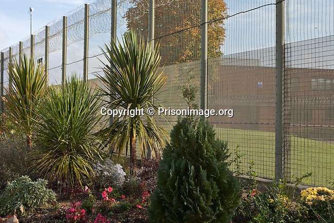 Palm trees and other plants within the grounds of the Prison garden projects at HMP & YOI Guys Marsh. Shaftesbury, Dorset, United Kingdom. Guys Marsh is a category C prison in Dorset and can house 578 prisoners.