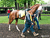 Chapter and Verse at Delaware Park on 5/18/15