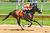 Quality Interest winning at Delaware Park on 6/15/17
