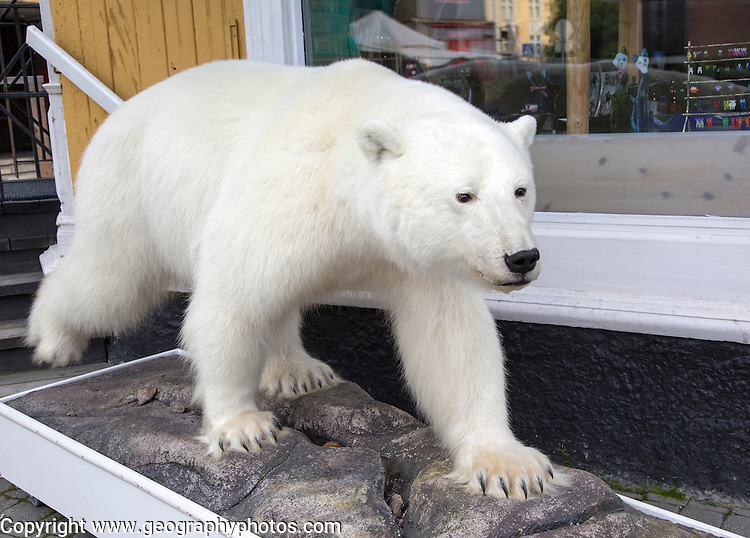 Polar bear 'Ursus maritimus' taxidermy,  Tromso, Norway