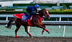 October 30, 2019: Breeders' Cup Sprint entrant Matera Sky, trained by Hideyuki Mori, exercises in preparation for the Breeders' Cup World Championships at Santa Anita Park in Arcadia, California on October 30, 2019. Scott Serio/Eclipse Sportswire/Breeders' Cup/CSM