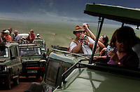 Crater Tourism:.Tanzania wants to boost the number of tourists to 1 million in ten years.  Right now there are about 300,000 tourists and 30,000 Masai.  The Masai homeland was Serengeti National Park... then they got thrown out of there and were all put in this crater... then they were all thrown out of the crater and this crater has become Tanzanias foremost tourist attraction.  The FZS people say the last 20 Rhinos in the crater may be reacting to this level of tourism... if it increases 3 to 4 fold it is hard to say what will happen.  More tourism also means more camps, more lodges and less land for Masai and their cattle..Also the lodges on the rim of the crater are sucking so much water that it is affecting the ecosystem.  Maasai are switching to smaller stock that can deal with drier conditions.   Even though the crater was their homeland, now they are only allowed to brind cattle in during the day to lick salt and then they have to leave.  But the more enterprising Maasai try to get money off tourists by selling their spears or posing for photographs.  This newfound wealth is creating a breakdown of the family system.  Where they used to get together in the forest for a meal with their extended families, now they have so few cows and everyone is out for themselves... so the money sucked off of tourism is spent on beer and cell phones.  The average Maasai now has 2 or 3 cows... the average in the 70's was 12 cows per Maasai.  In previous years, if a Maasai family lost cows, the rest of the community would get together and replace them... not anymore....  The Maasai were kicked out of Serengeti National Park.  Then they were kicked out of the crater which is now Tanzania's main tourist attraction. Now they feel like they are squatters on their land and might be kicked out of the NCA at any time. This family cannot cultivate much, can't buy a tractor, can't fence their land etc... etc... because they are in a multi-use area of the NCA.  So this family survives m