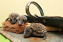 27/06/2012.<br />