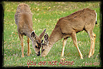 Inspirational photo of two deer eating grass together in Cherry Creek State Park, Denver, CO
