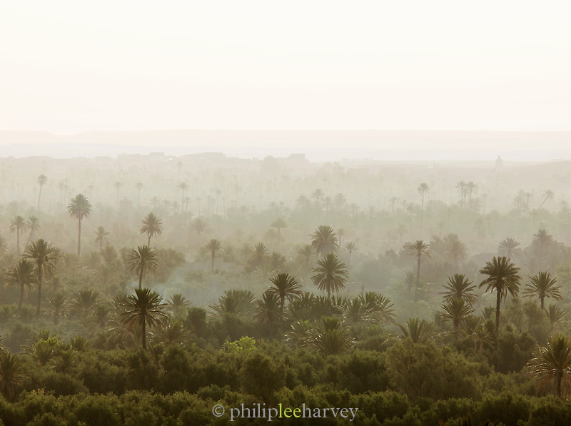 Palms of the Skoura Oasis in Morocco at dawn
