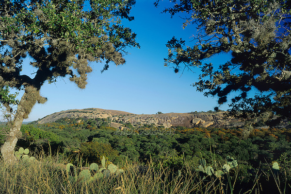 Dome seen through Live Oak trees,Enchanted Rock State Natural Area, Fredericksburg,Texas, USA